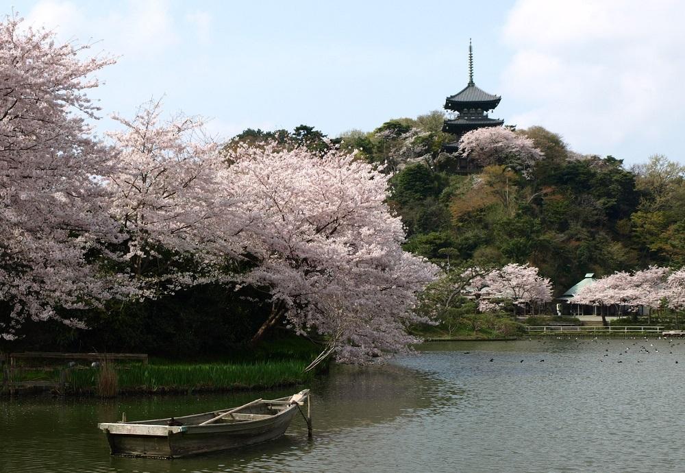 Los 10 mejores lugares para ver cerezos en flor (Sakura) en Yokohama 2020