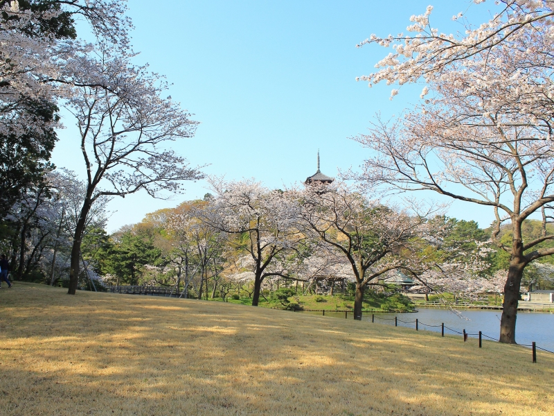 Sankeien Garden Cherry Blossom Night Viewing 2019