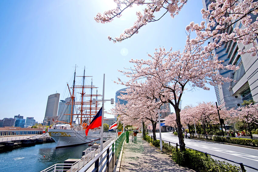 Minato Mirai 21 Sakura Festa (Cherry Blossom Festival) 2018