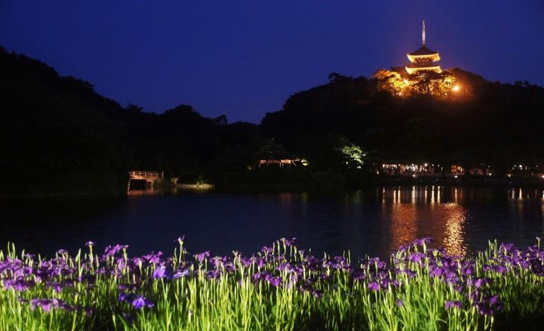 Sankeien Garden Firefly Evening 2020