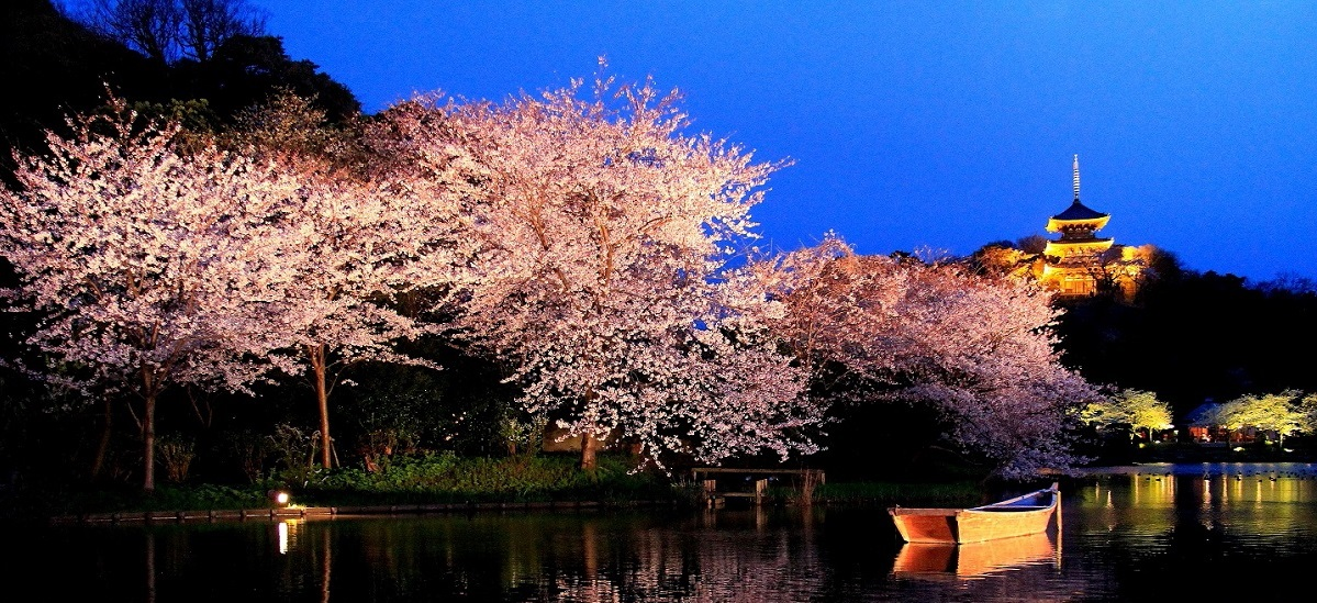 Top 10 Best Cherry Blossoms (Sakura) Viewing Spots in Yokohama 2021