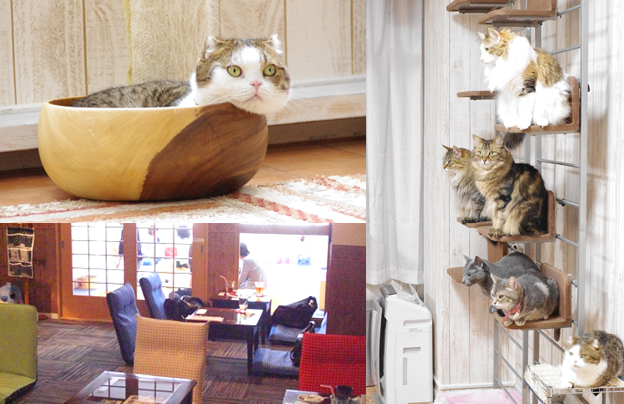 "Cat Cafe ""NEKO-Cafe Leon"""