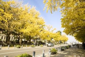 Calle Estación Nihon-odori