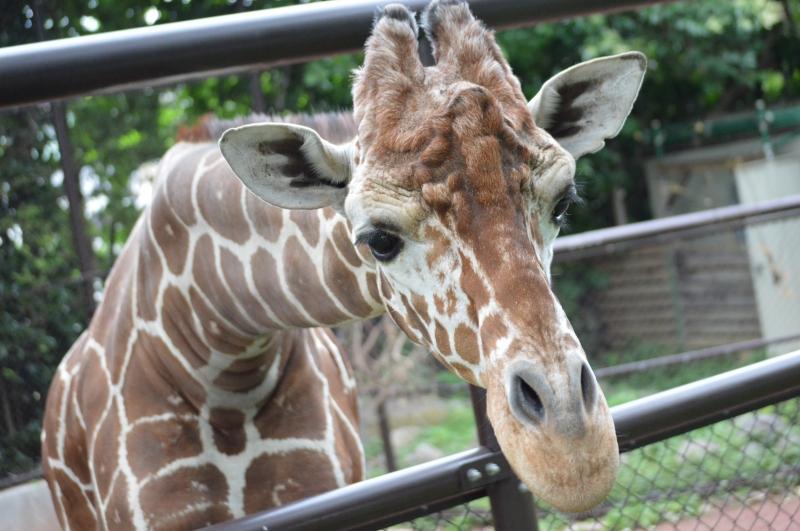 Nogeyama Zoological Gardens