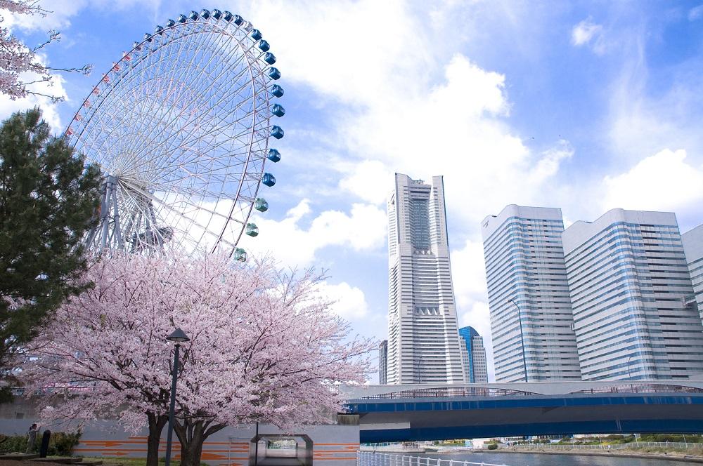 橫濱的賞櫻景點 嚴選10處櫻花勝地